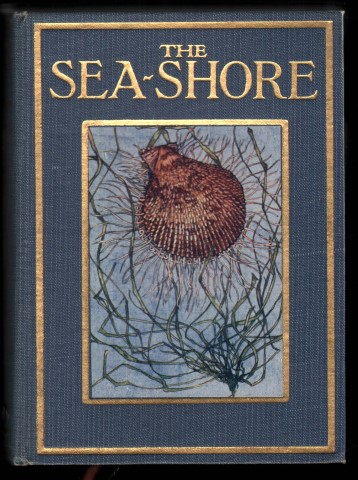 Image for The Sea-Shore. Shown to the Children.