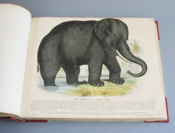 Plates Illustrative of Natural History, with a Short Description Annexed to Each Plate. Published under the Direction of the Committee of General Literature and Education...