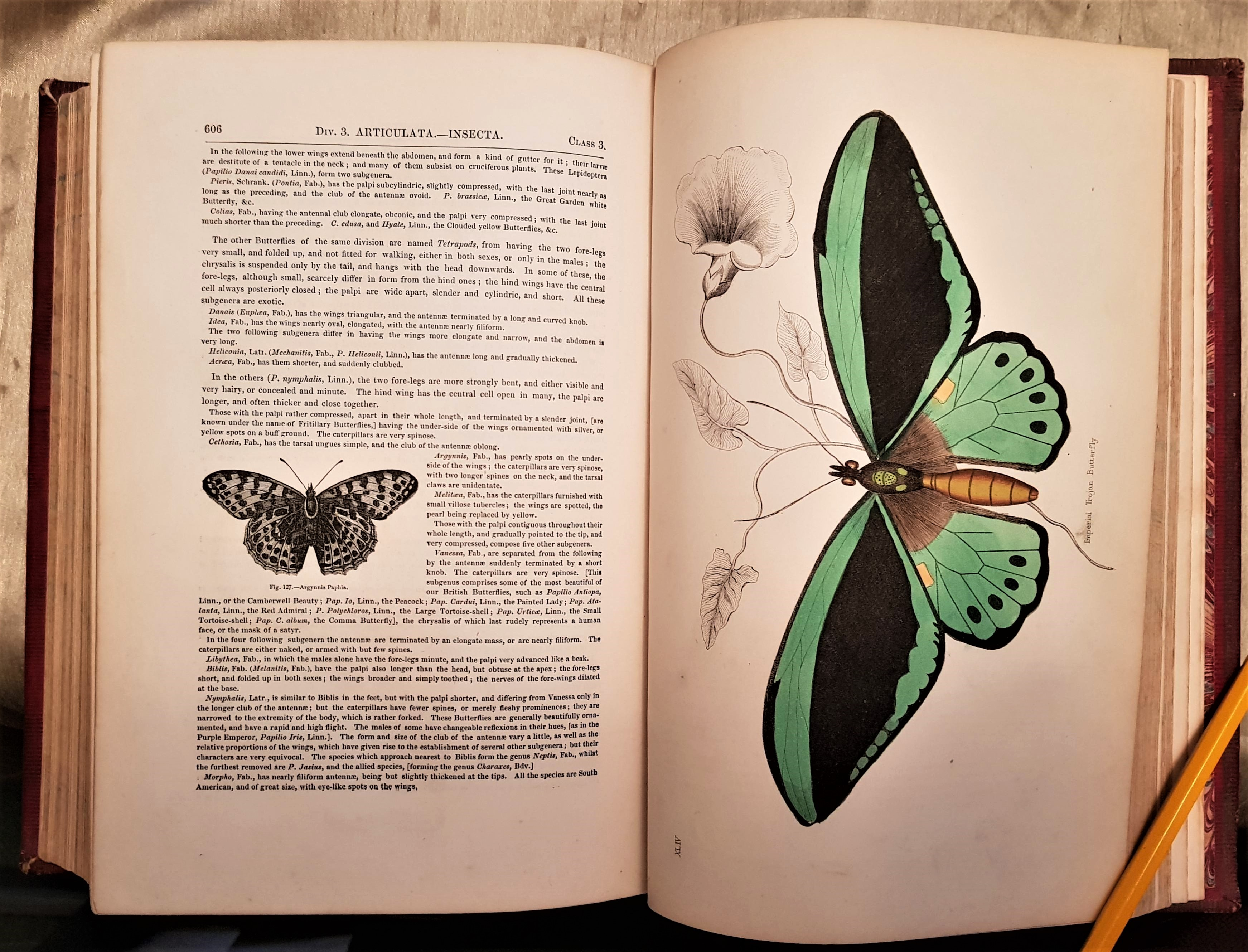 The Animal Kingdom, Arranged After Its Organization; Forming A Natural History Of Animals, And An Introduction To Comparative Anatomy. By The Late Baron Cuvier. Translated And Adapted To The Present State Of Science. New Edition...
