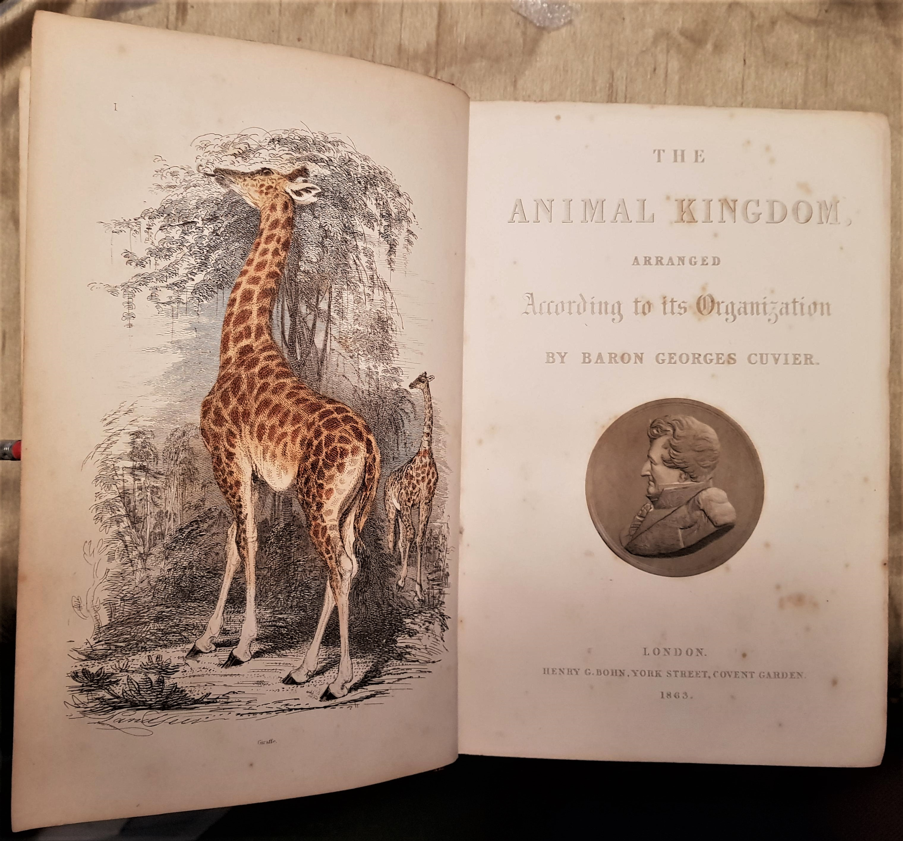 Image for The Animal Kingdom, Arranged After Its Organization; Forming A Natural History Of Animals, And An Introduction To Comparative Anatomy. By The Late Baron Cuvier. Translated And Adapted To The Present State Of Science. New Edition...
