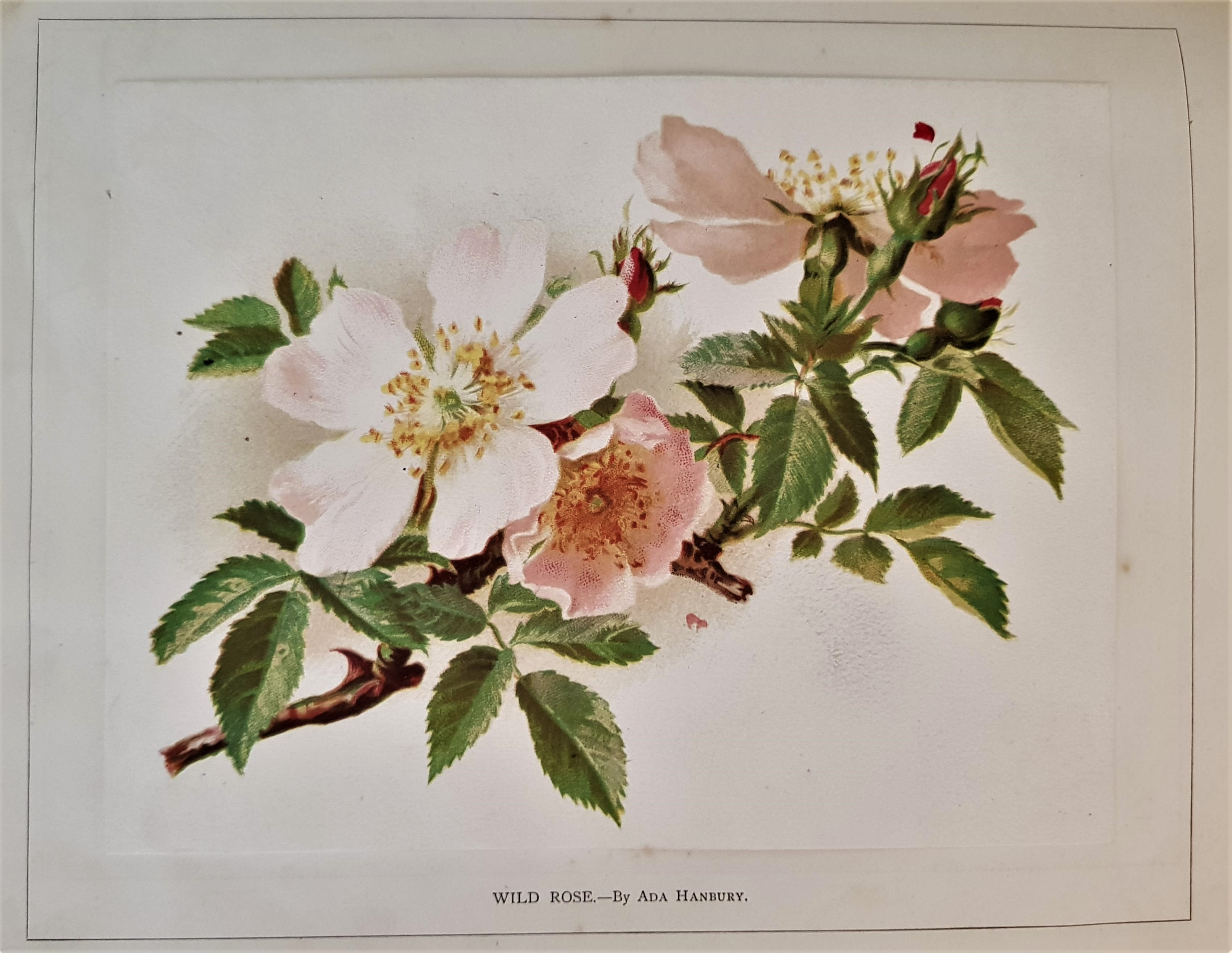 Image for Vere Foster's Simple Lessons in Water-Color.  Flowers.